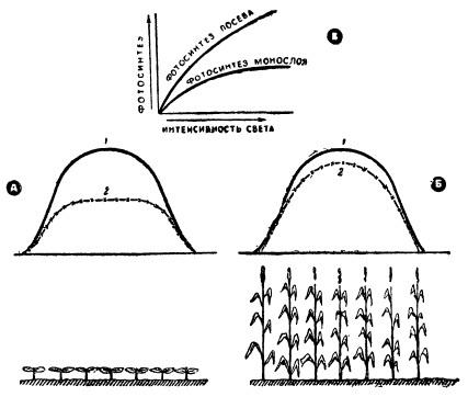 Дневной ход радиации и фотосинтеза посевов