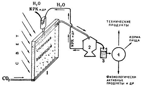 Схема установки по непрерывному производству биомассы хлореллы