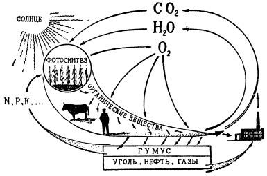 Схематическое изображение круговорота веществ в природе
