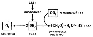 Природа фотосинтеза