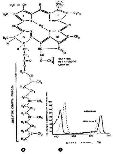 """Структура молекулы хлорофилла """"а"""" и """"б"""""""