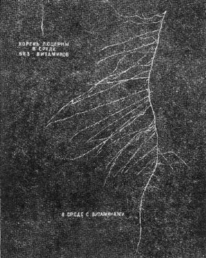 Влияние витаминов на рост изолированных корней люцерны